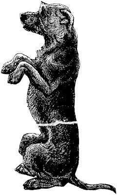 dog, black and white drawing, sitting dog