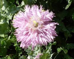 Diny's Garden Blog