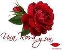 Você é uma linda Rosa no Jardim de Deus