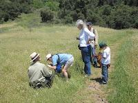 Brodiaea reserve