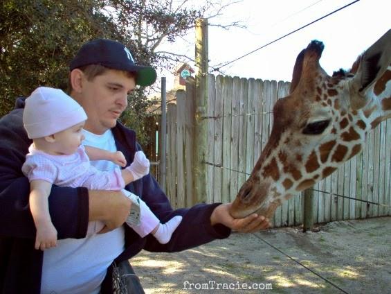 Thomas and Katarina feeding a giraffe
