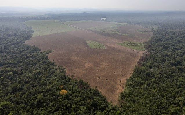 Cleared smaller section of forest below the range of 25 hectares that government satellites can detect (Credit: AP Photo/Andre Penner) Click to enlarge.