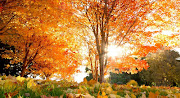 15 Nuevos paisajes del otoño: ¡Maravillas de la naturaleza! orange foliage wallpaper