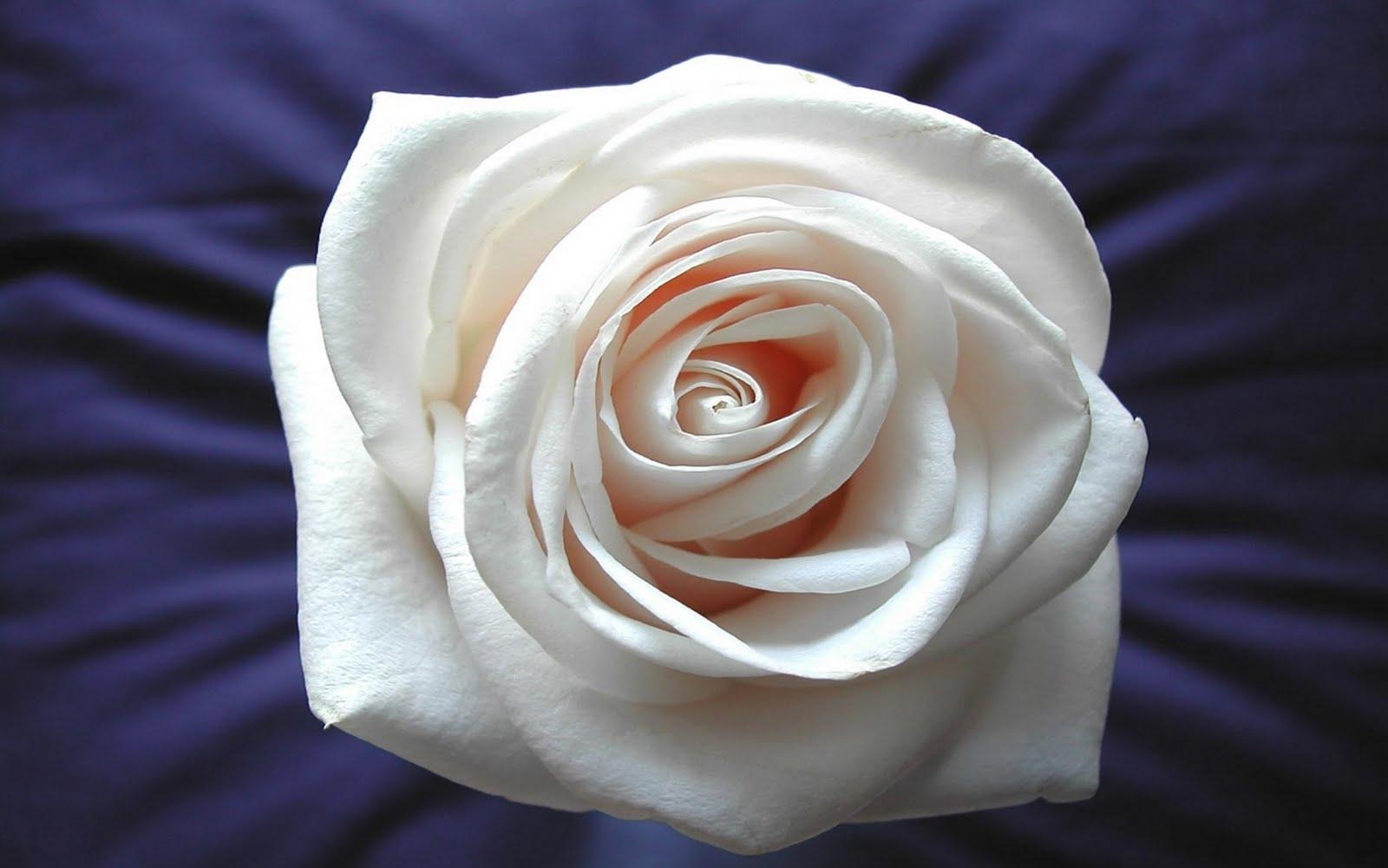 http://2.bp.blogspot.com/-LQJUL47VWHU/TdlklDBKxRI/AAAAAAAAQJ4/Pe8gHxfSCdM/s1600/flowers-67.jpg