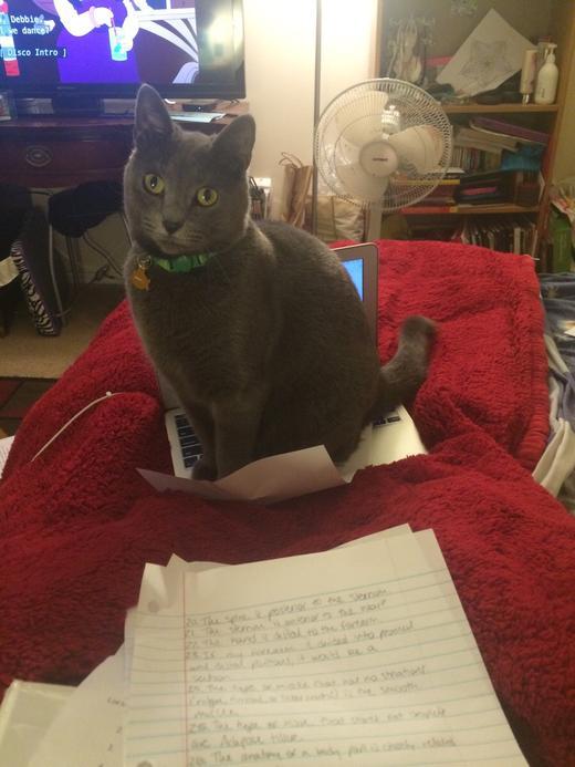 Смешной кот - человек, помощь нужна?