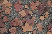 Gravel and autumn leaves free textures