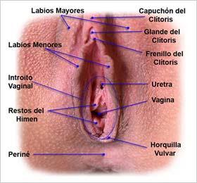 Me sali un bulto un poco grande en el labio vaginal