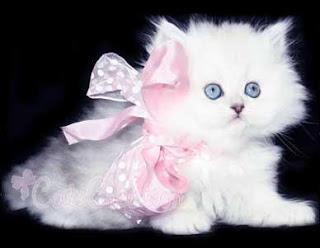 أجمل القطط