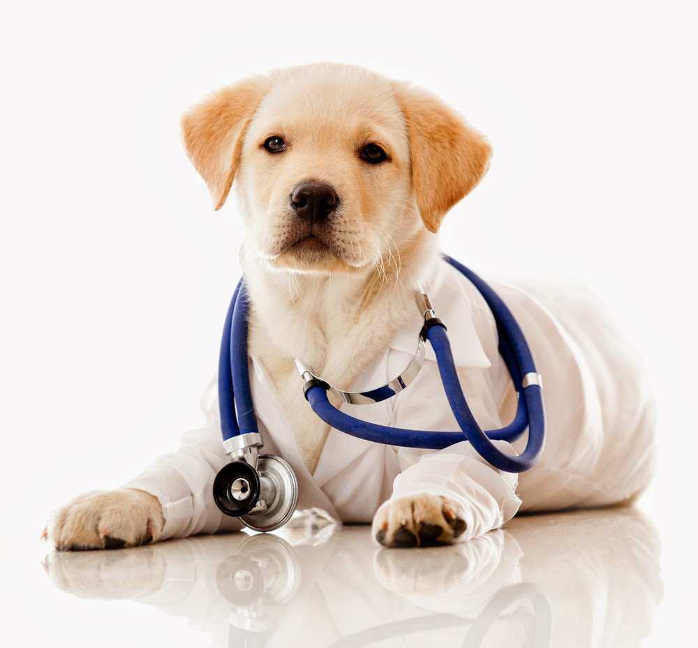 Best Veterinarians Clinic in Delhi