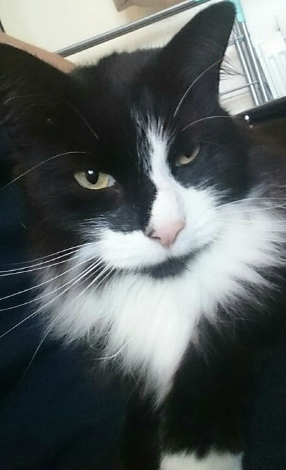Sooty the black-and-white cat