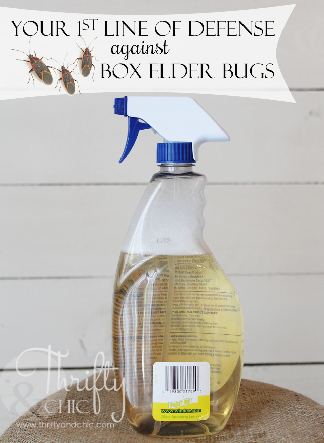 Kill box elder bugs with two simple ingredients! Safe for children and pets