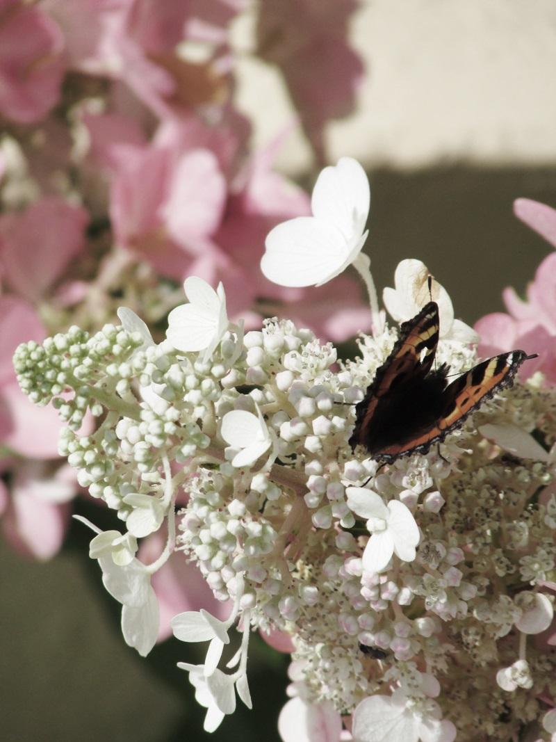 Shabby Chic & Co.: Sommer, Sonne, Schmetterlinge...