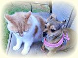 Milo & Madi