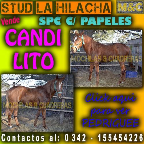 SLH - CANDILITO