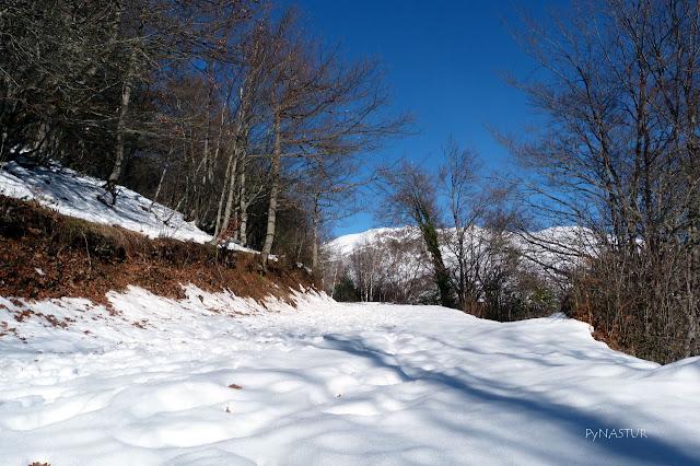 Snowy beech forest Asturias Spain