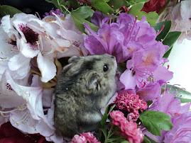 Sanzi in rododendroni