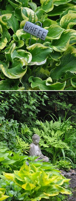 Hostas have some of the Best Names!