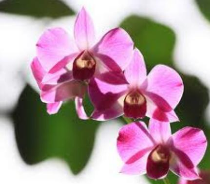 Enchanted orchid