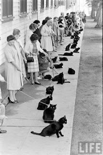 A line of black cats on leashes for an audition