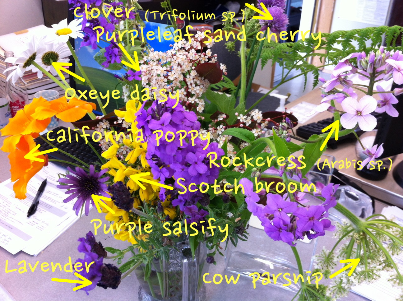 Names Of Different Flowers And Pictures Savingourboysfo