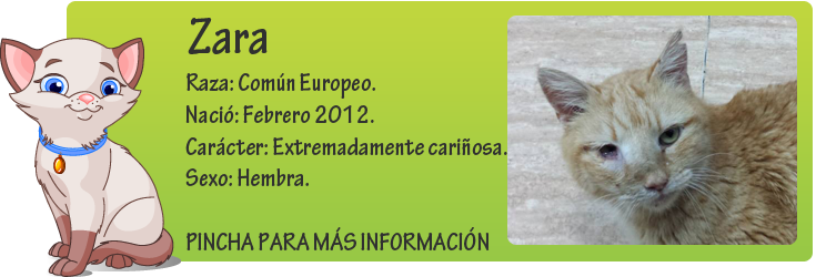 http://mirada-animal-toledo.blogspot.com.es/2014/02/zara-sufre-una-rara-enfermedad.html