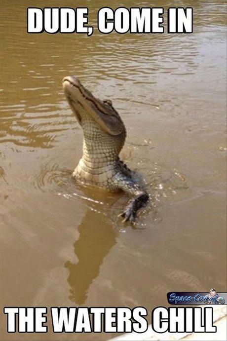 funny crocodile picture humor