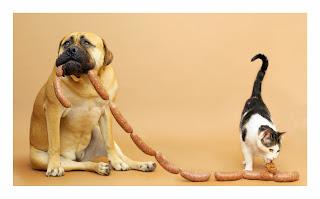 El perro: ayuda