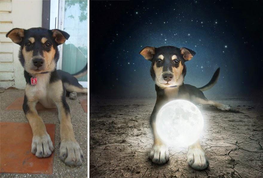 perros de refugios