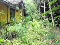 Rumahku yang kaya akan tumbuhan