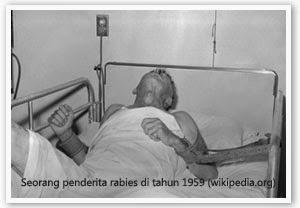pasien rabies
