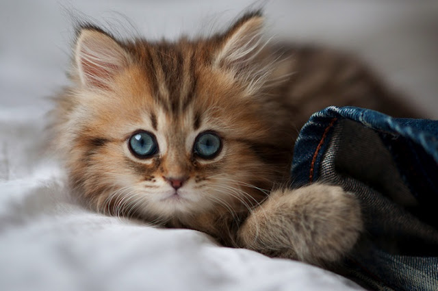 The Most Photogenic Kitten