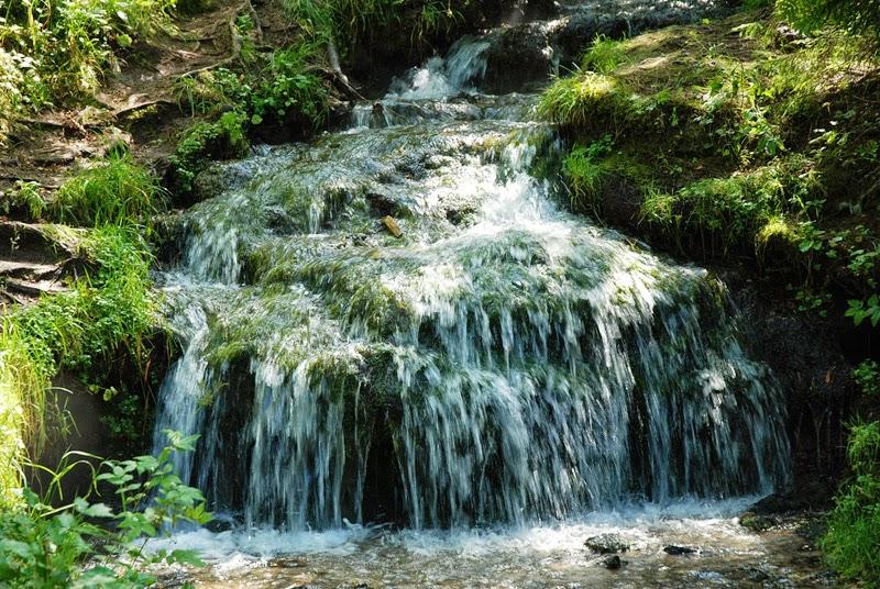 широкий лесной ручей.