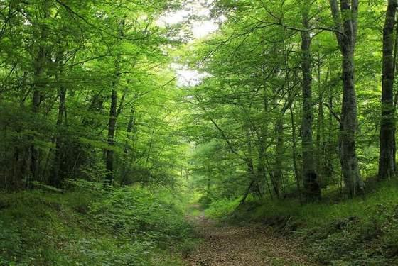 imagen_condado_treviño_bajauri_bosque_hayas