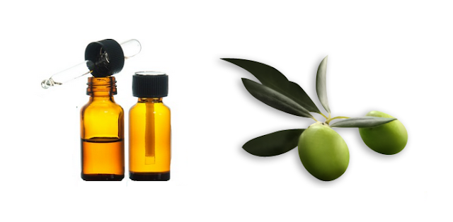 olive leaf in aromatherapy