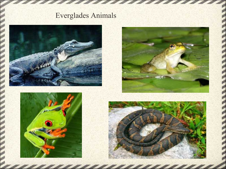 everglades national park research paper Everglades essays: over 180,000 everglades essays, everglades term papers, everglades research paper,  the everglades national park is.