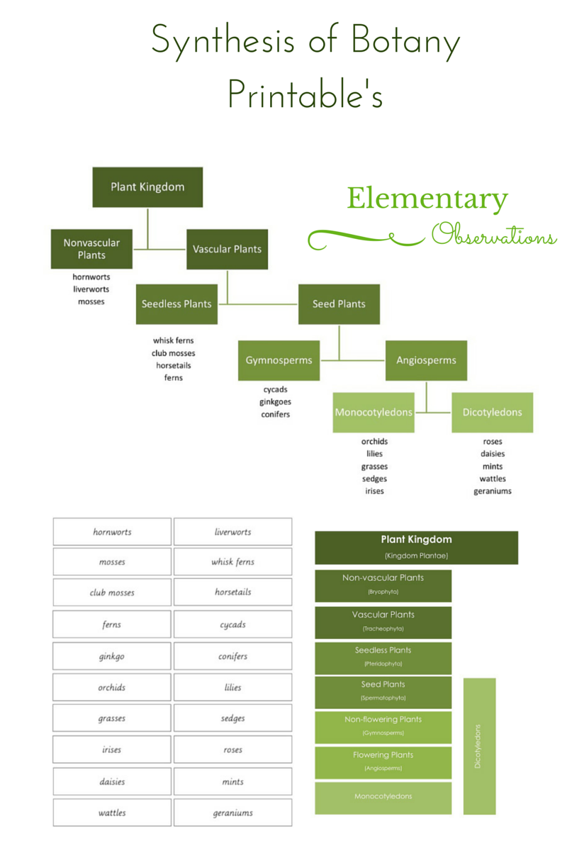 Elementary observations botany classifying in addition to the impressionistic botany charts there is also the plant kingdom chart this way of classifying plants comes after the types and parts of nvjuhfo Gallery