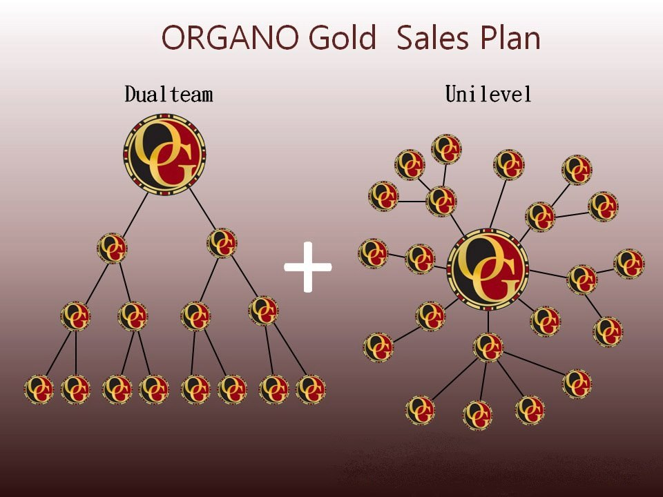 My organo gold friends around the world complan free website replicating organogold which means you do not have to spend any time or money creating your own website organo gold creates one for colourmoves