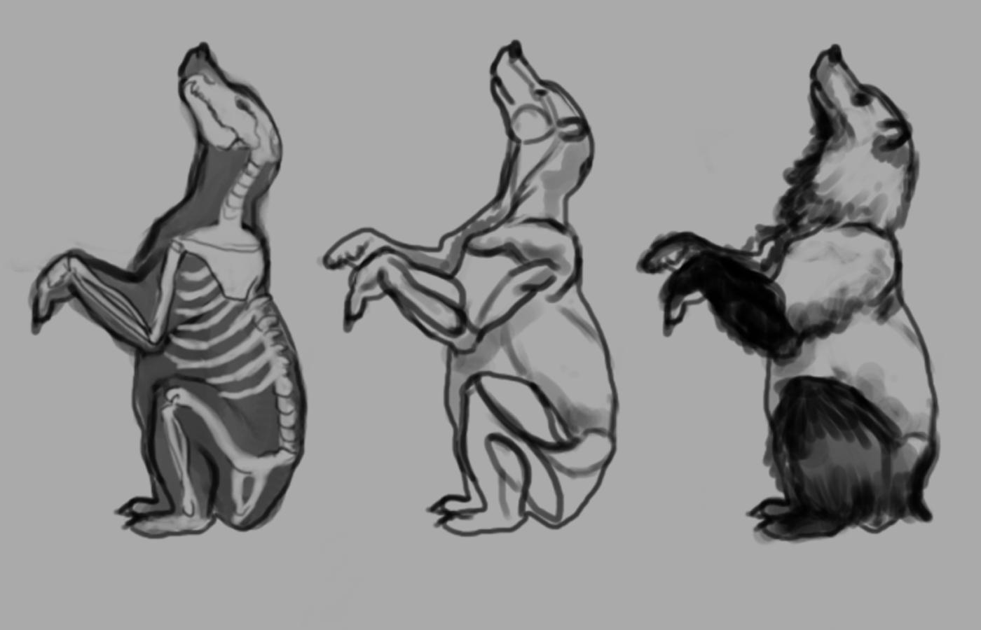 Bear Paw Anatomy Image collections - human body anatomy