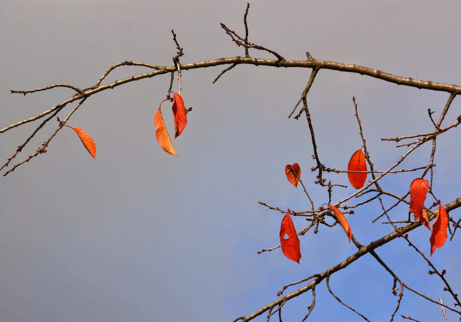 Orange leaves on a branch
