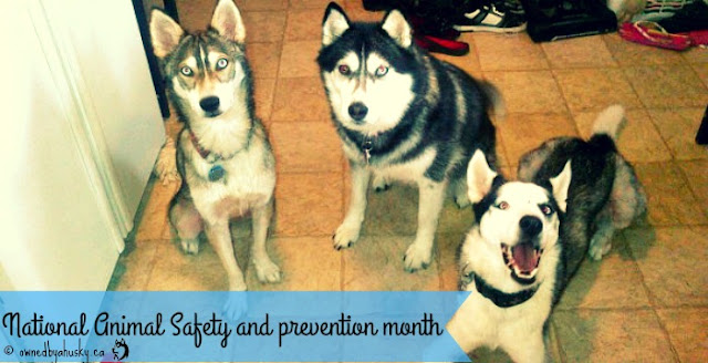 National Animal Safety And Prevention Month