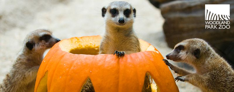 11 fall activities to check out in Seattle; Woodland Park Zoo's Pumpkin Bash