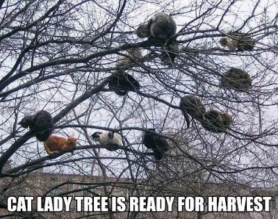 Cat lady tree is ready for harvest