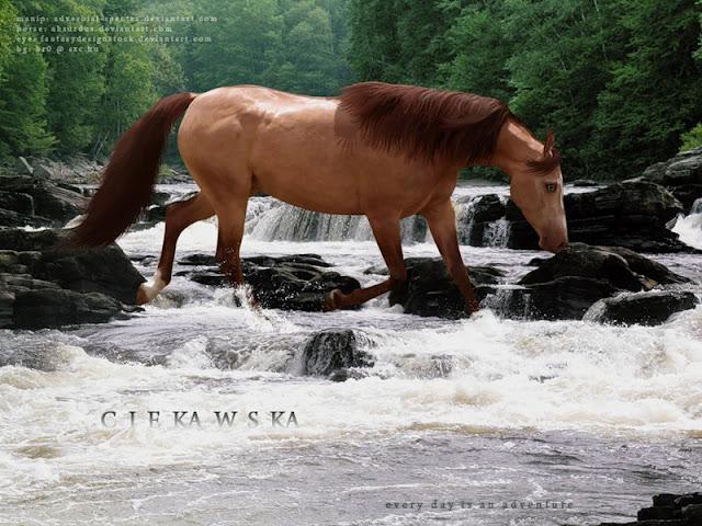 красивые картинки лошадей