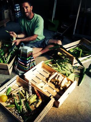 maïs doux multicolore