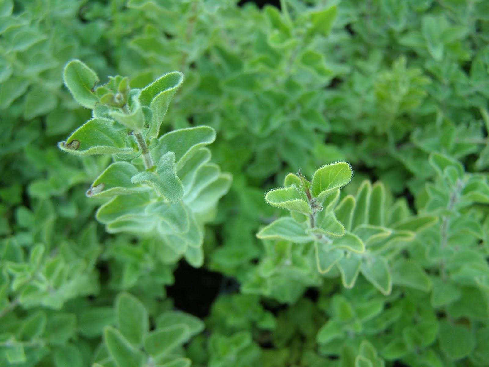Φυτώρια άκης καλλιανίδης