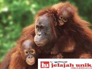 10 Hewan Langka Asli Indonesia
