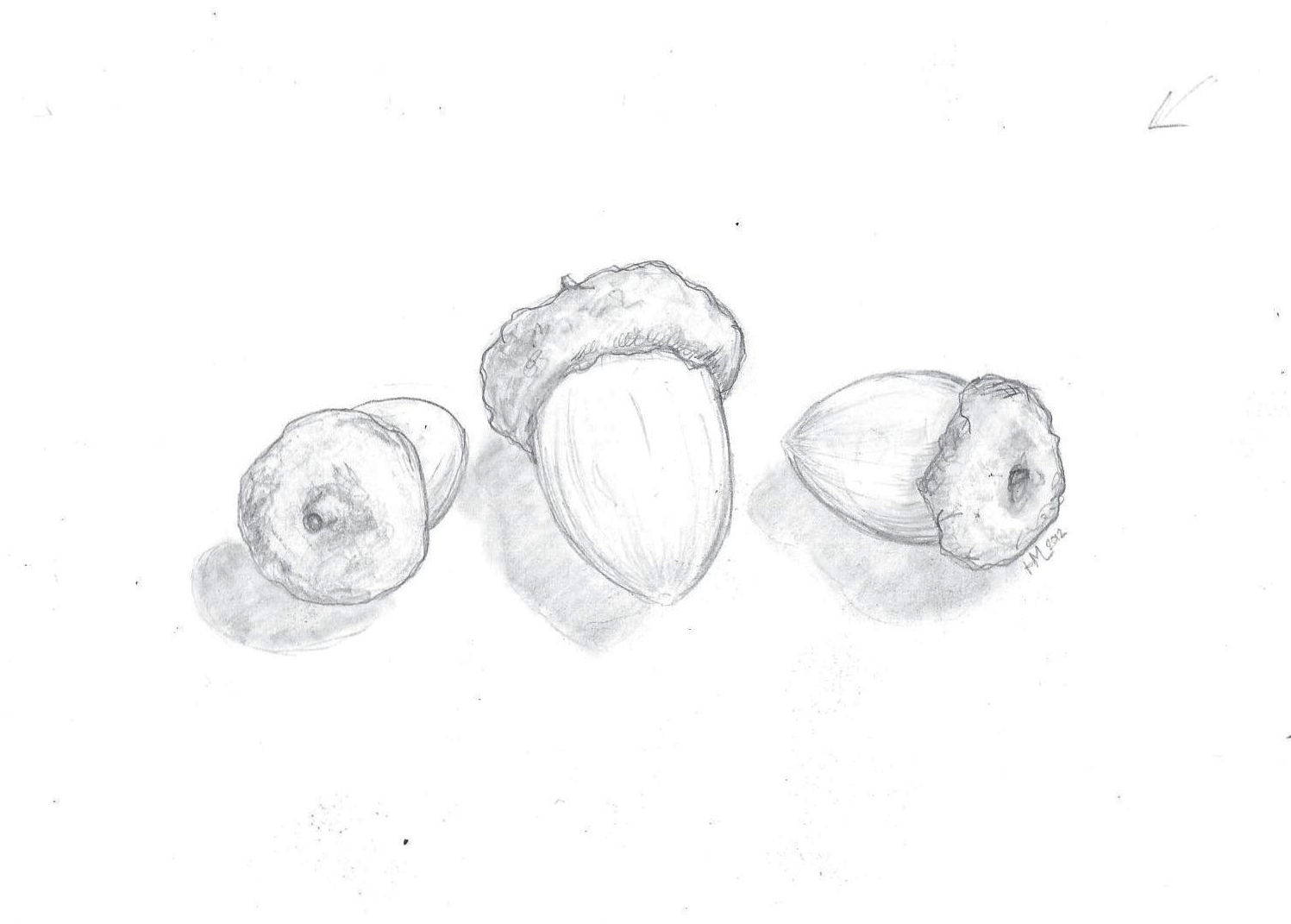Uncategorized Drawings Of Acorns from pencil to paper realism drawings acorns