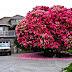 20 de los árboles más hermosos del mundo