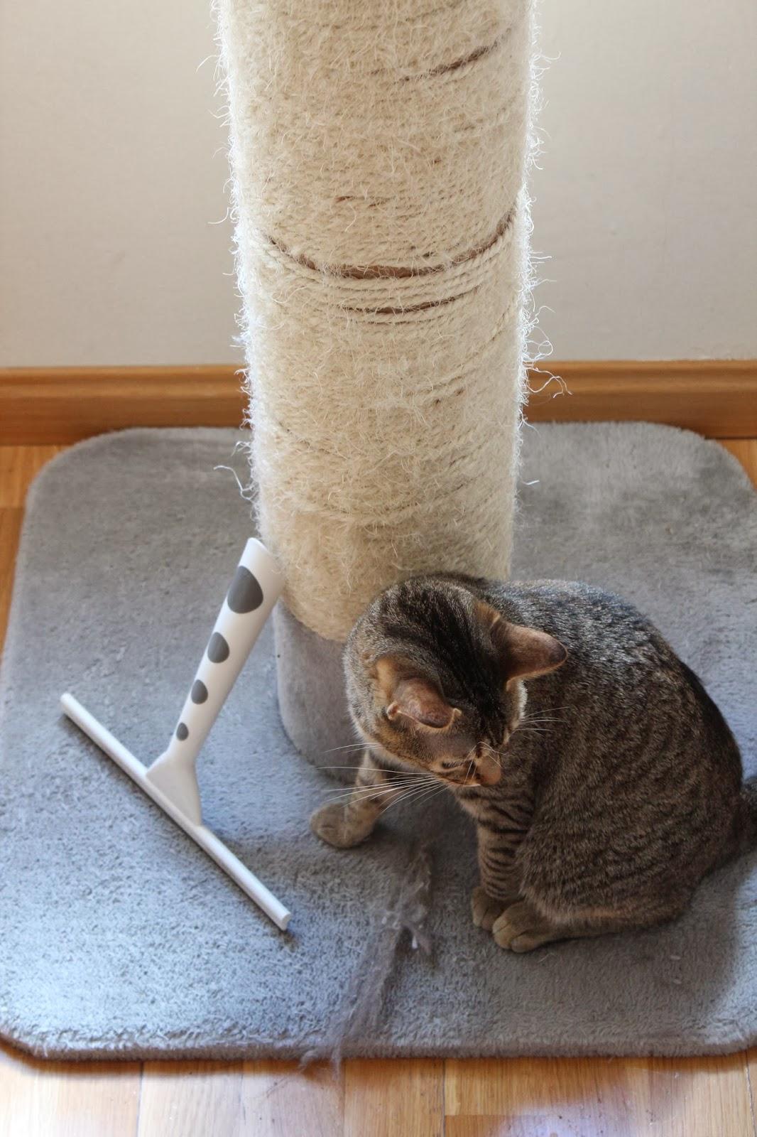Quitar pelos de mascota, limpieza pelos gato, cepillo pelos gato.