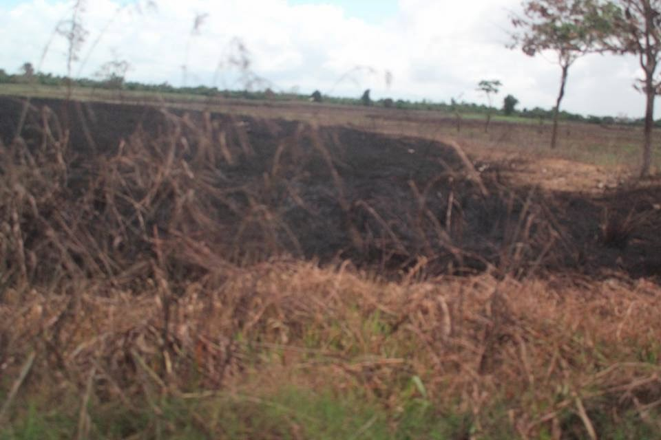 kaingin farming